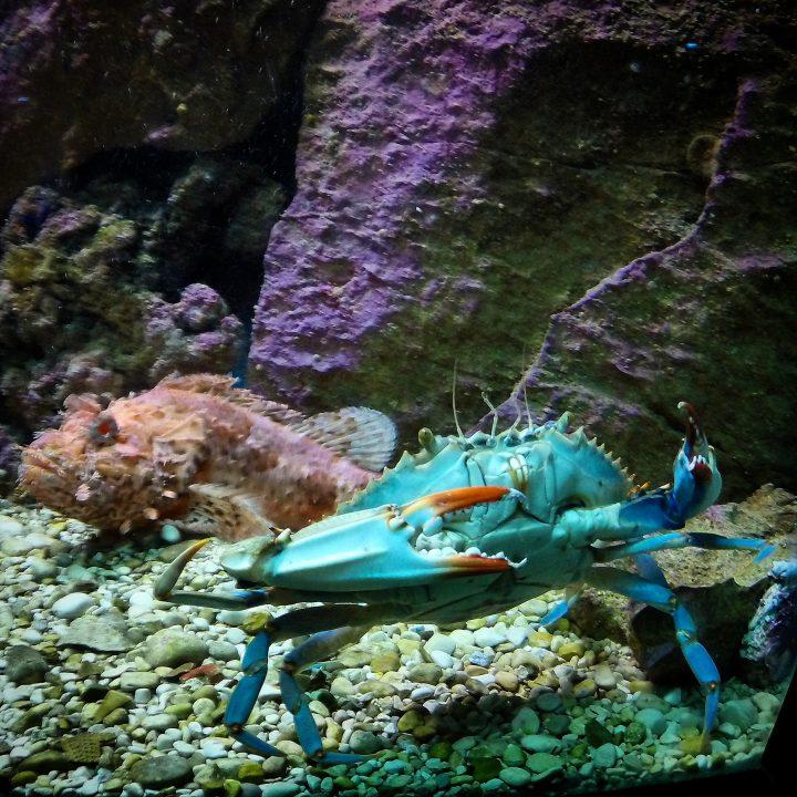 Akwarium w Dubrowniku