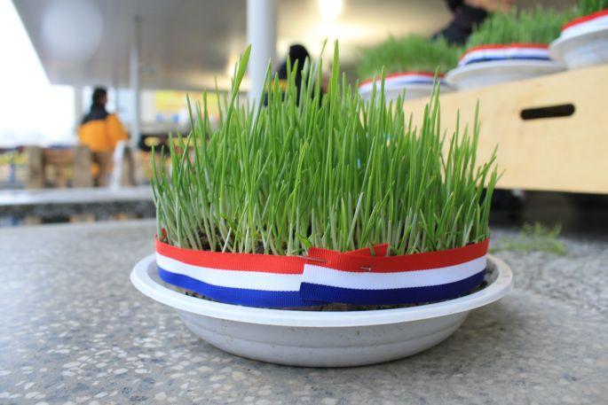Kiełkująca pszenica (źródło: ebrod.net)