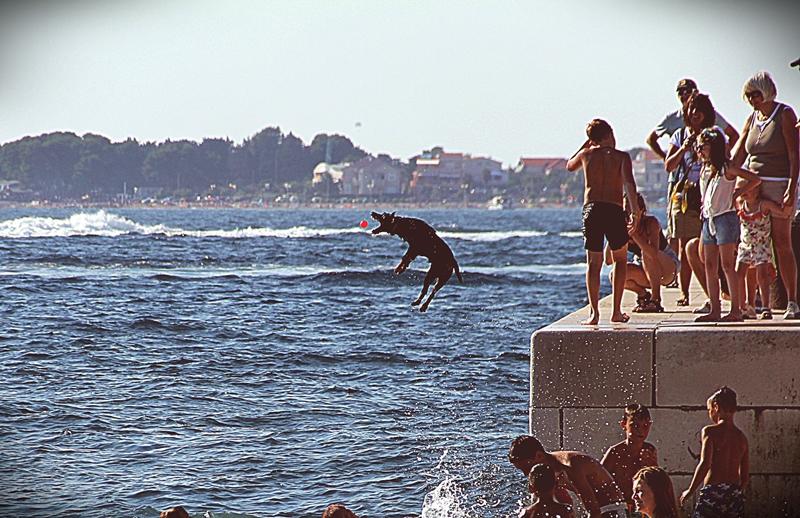 Skaczący do wody pies w Zadarze
