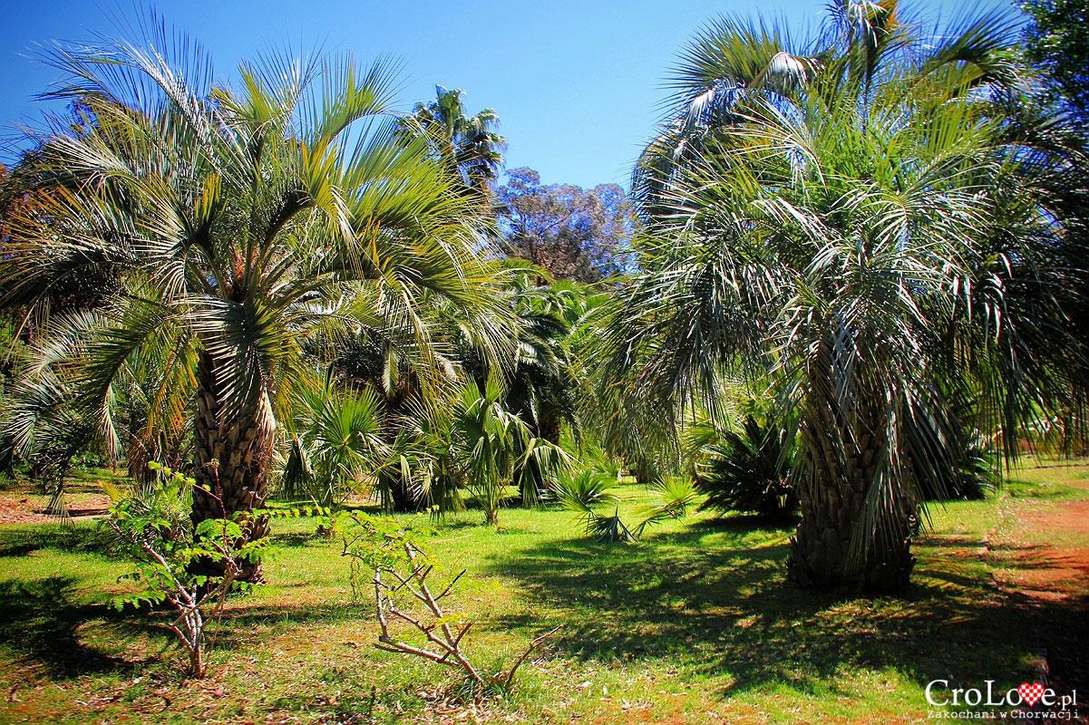 Ogród botaniczny na wyspie Lokrum