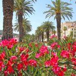 10 miejsc, które warto zobaczyć w Dalmacji