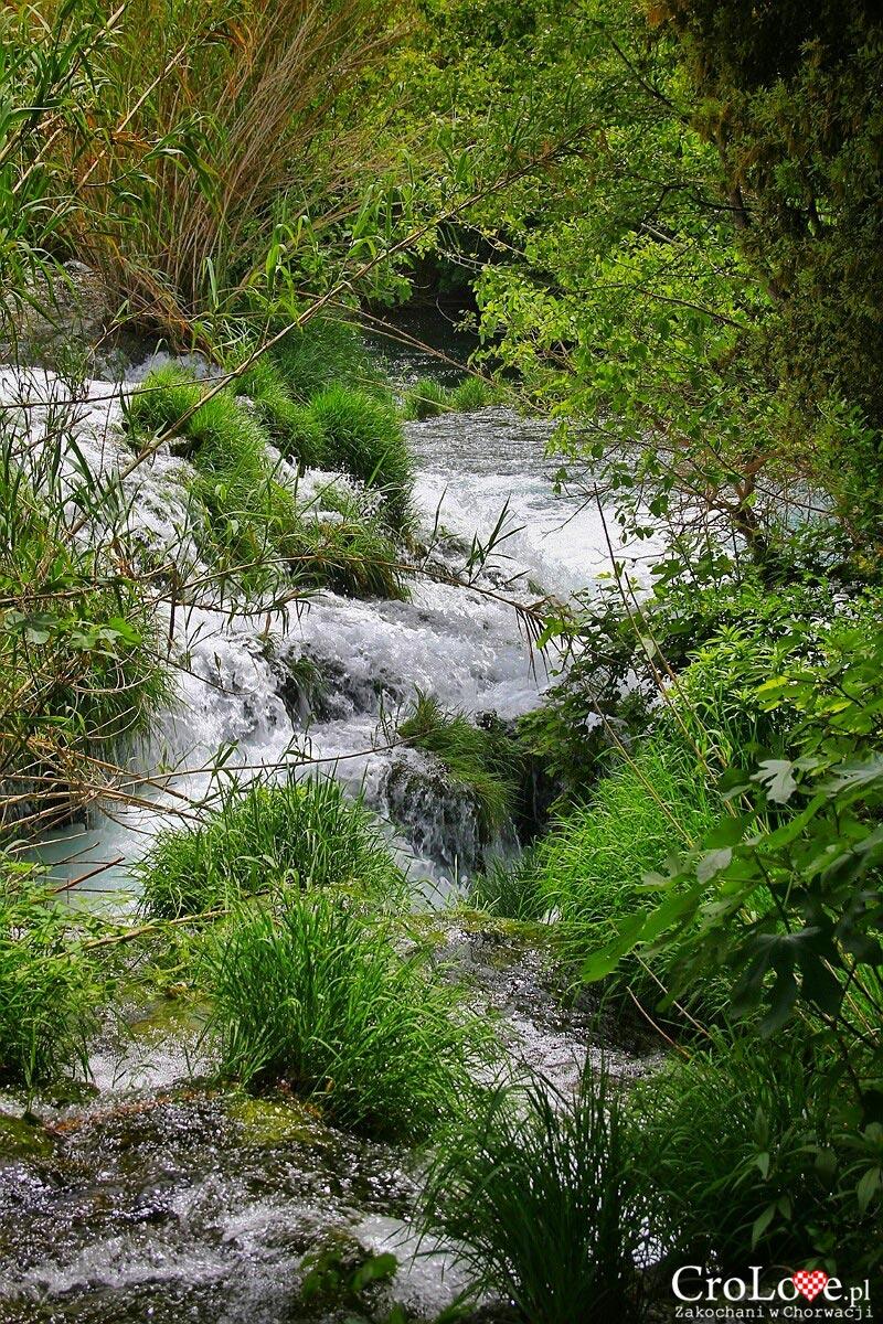 Wartki nurt rzeki Krka