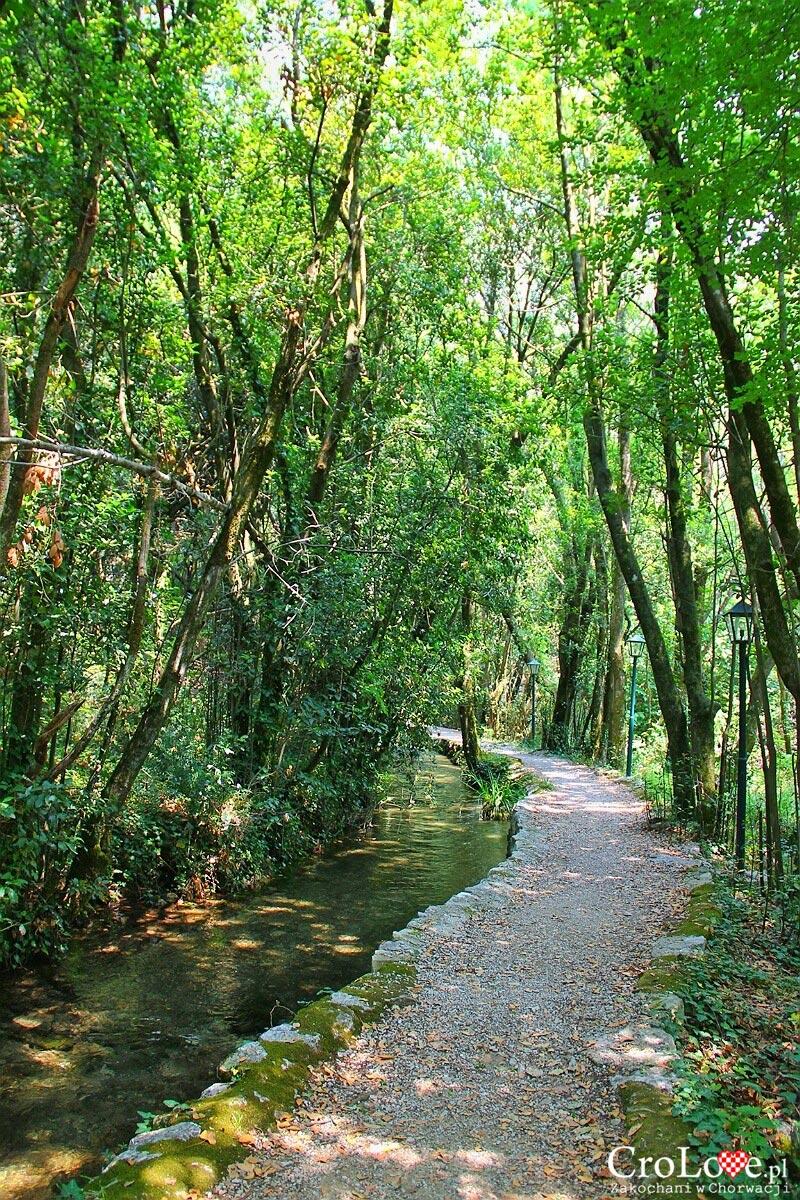 Rzeka Ljuta