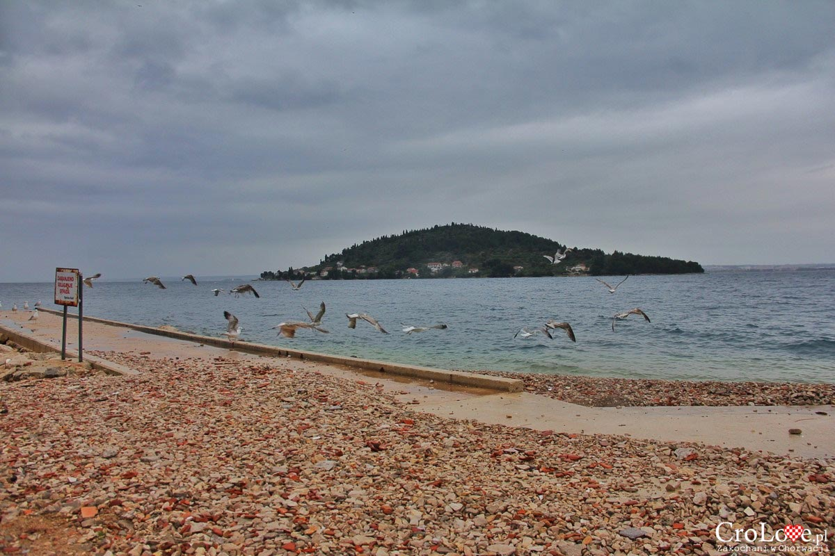 Wyspa Ugljan