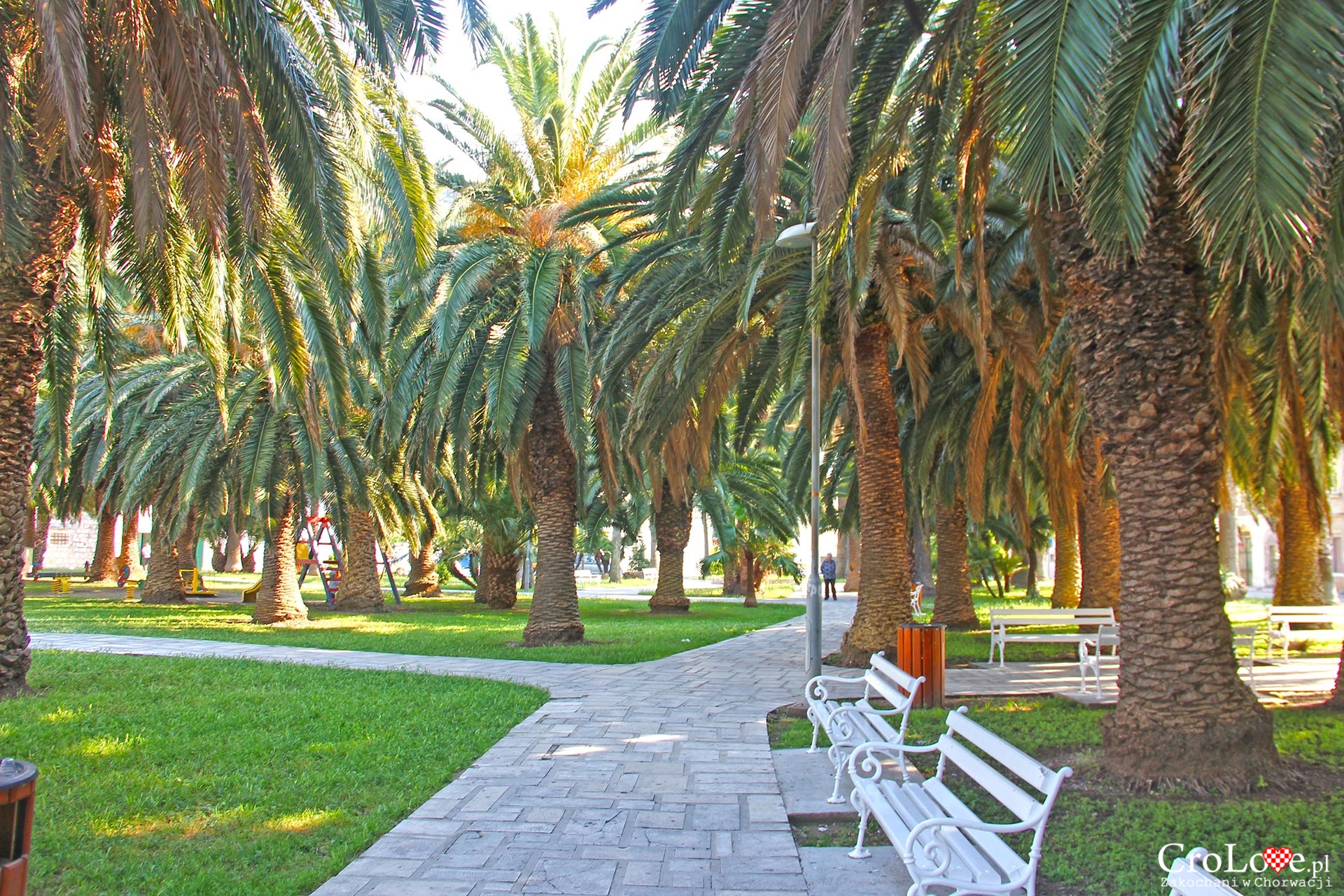Palmy w Vis