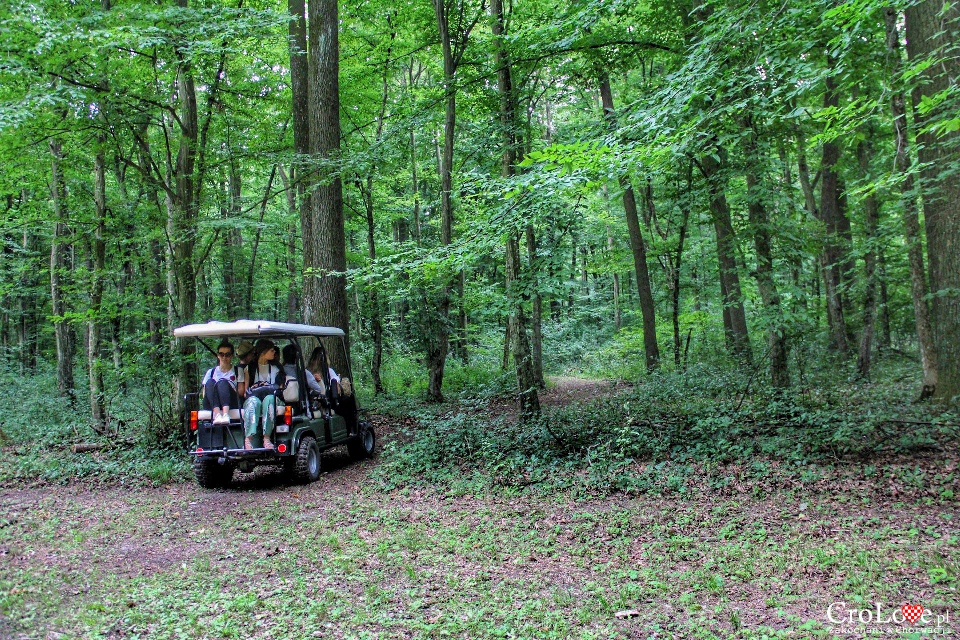 Las dębowy w Kunjevci