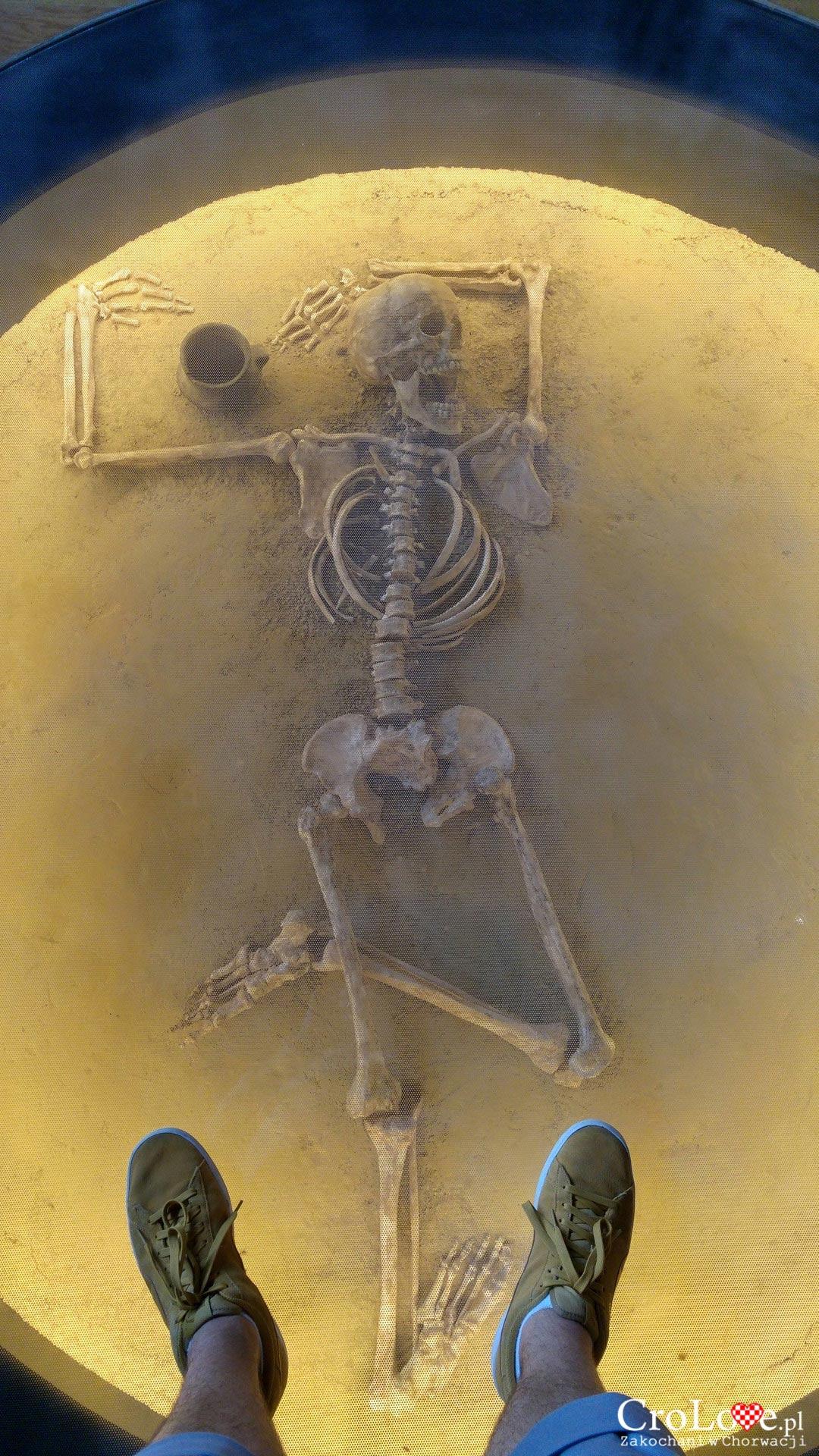 Zmarły pochowany w pozycji Oriona. Muzeum Kultury Vučedolskiej w Vučedolu