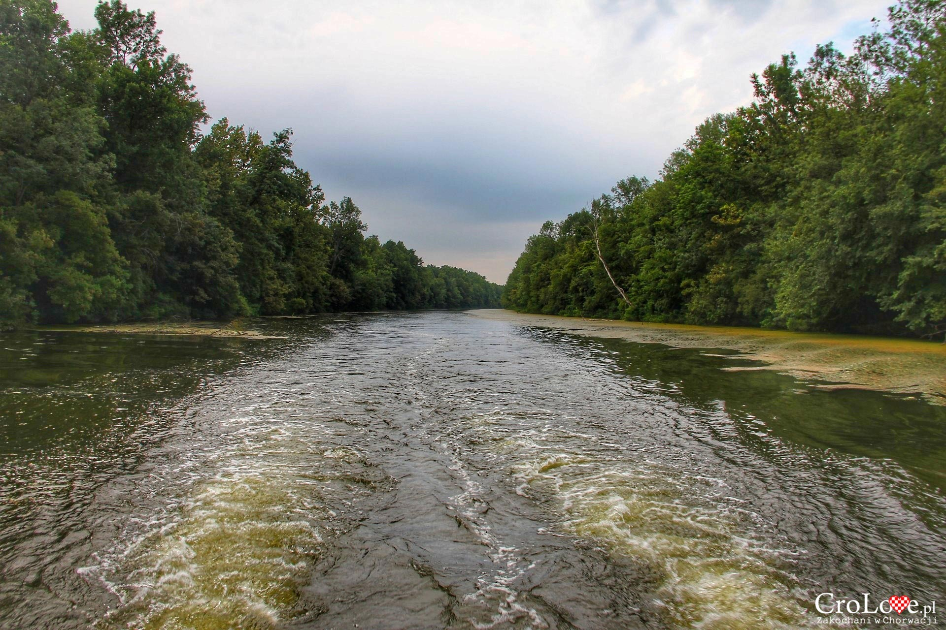 Rzeka Bosut