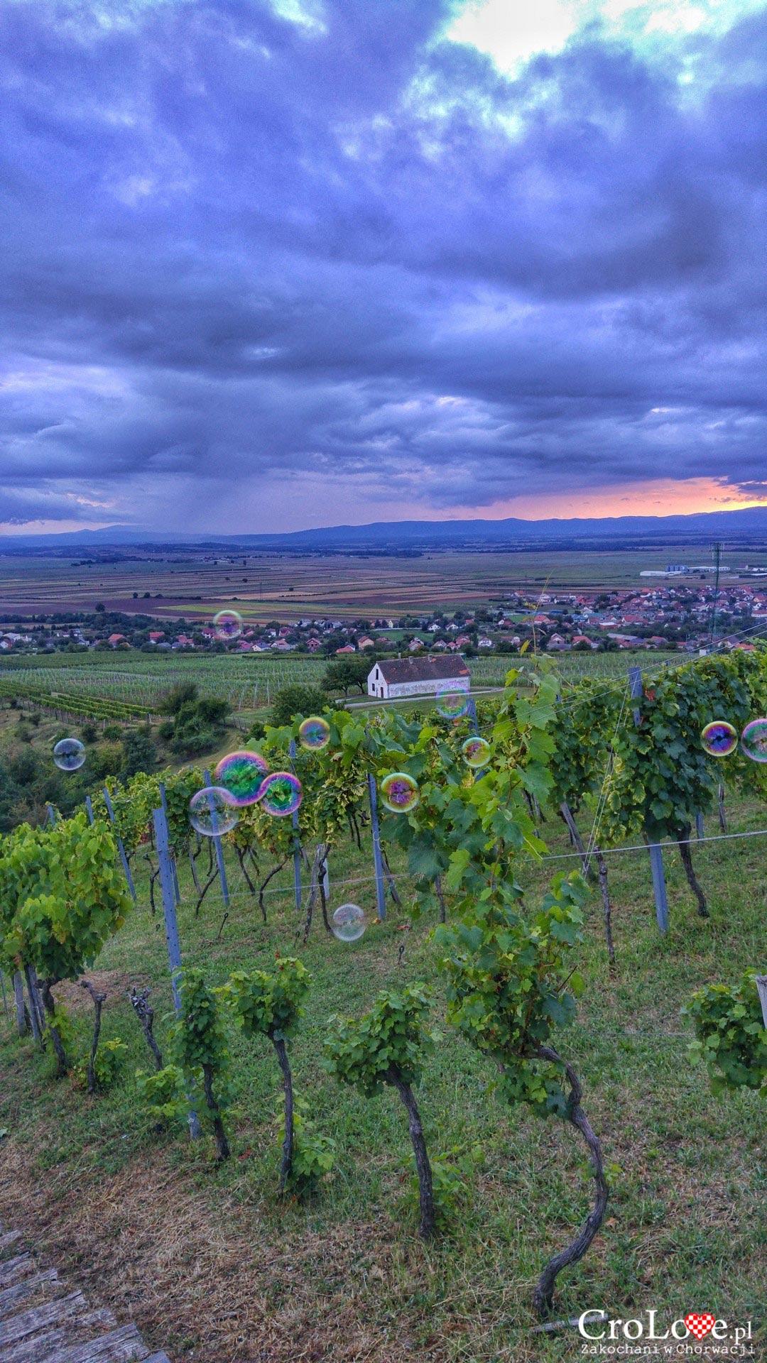 Winnica Kutjevo