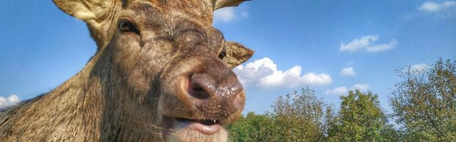 Farma jeleni i muflonów OPG Perhoč