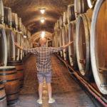 Iločki podrumi – wina słynne na cały świat