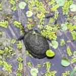 Park przyrody Kopački Rit – europejska Amazonka