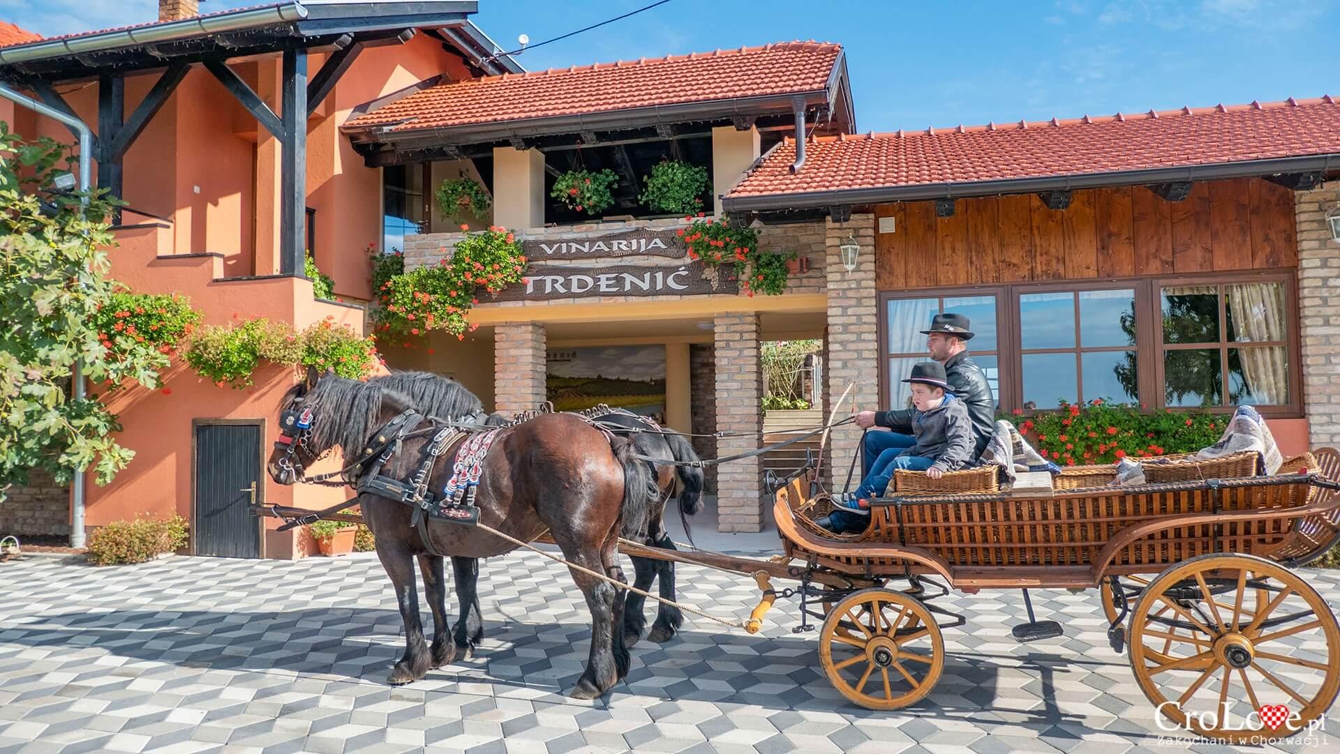 Winiarnia Trdenić, Popovača - region Sisačko-Moslavački