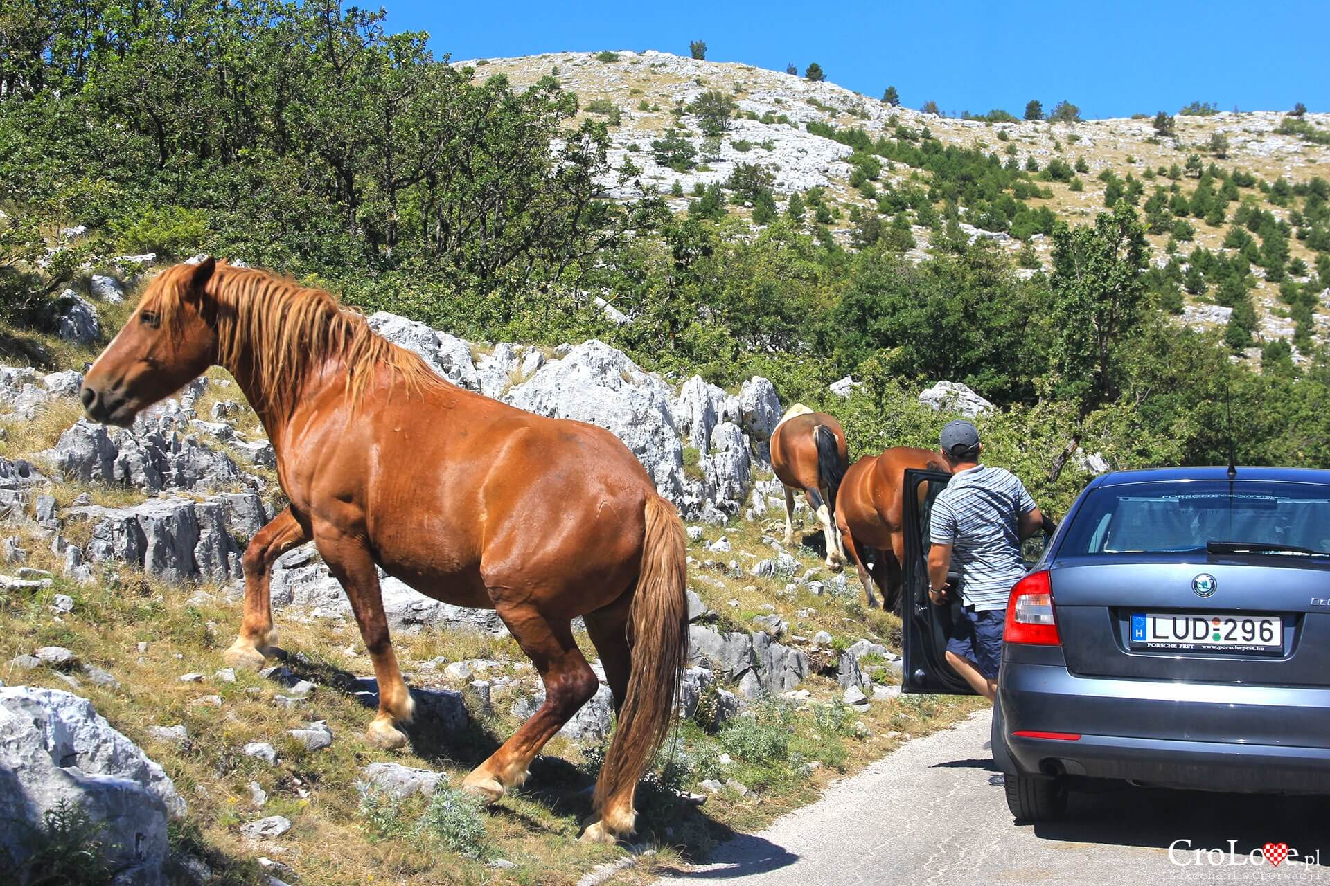 Dzikie konie w PP Biokovo