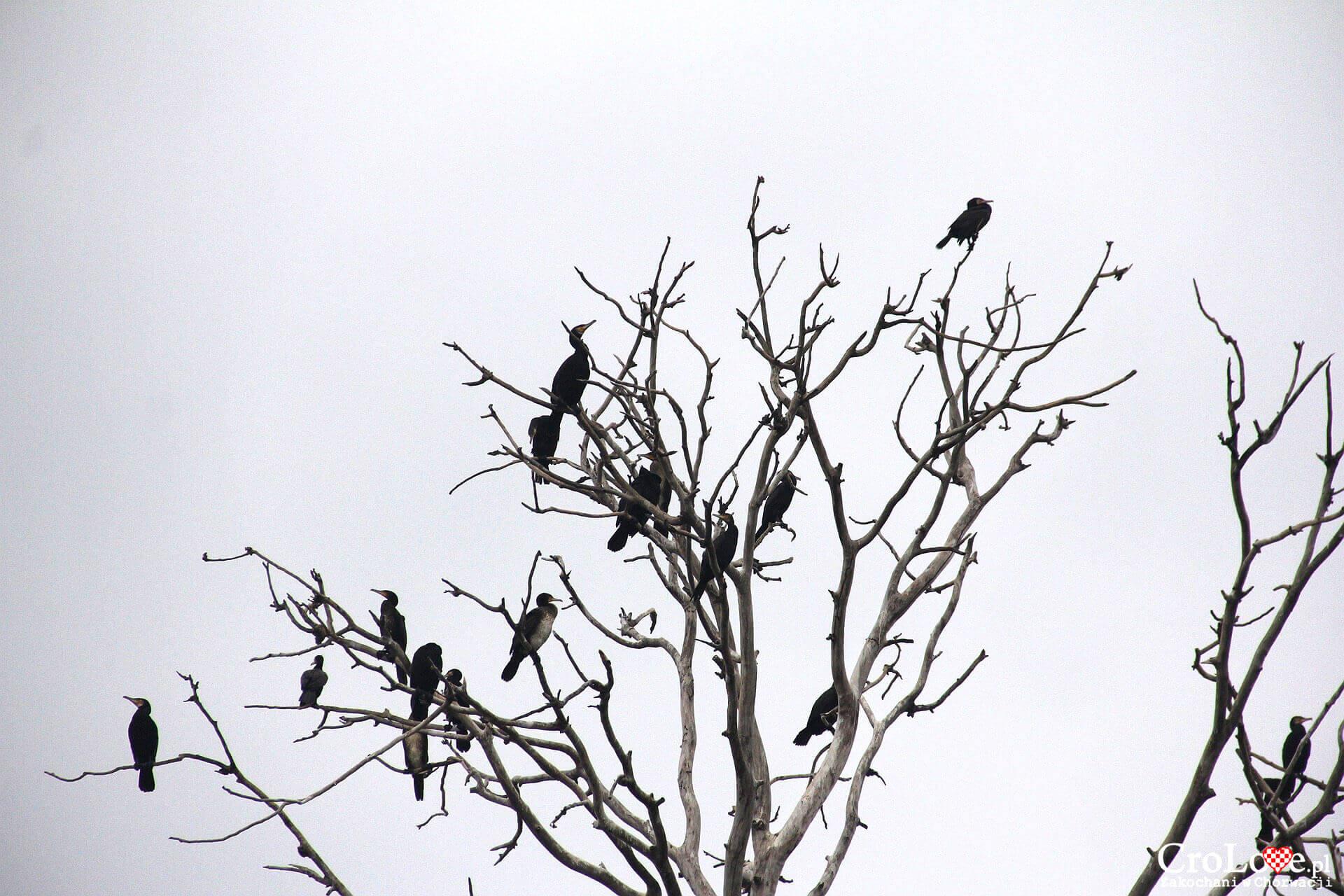 Ptactwo w Parku Przyrody Kopački Rit