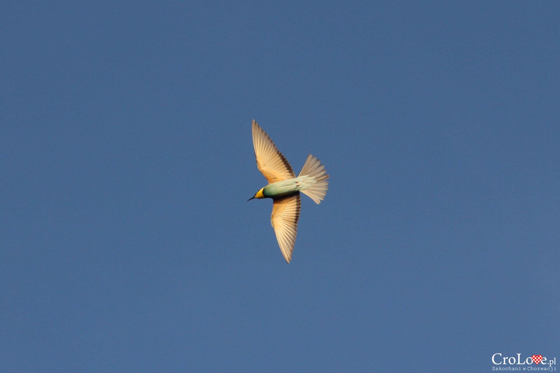 Ptactwo w PP Telašćica
