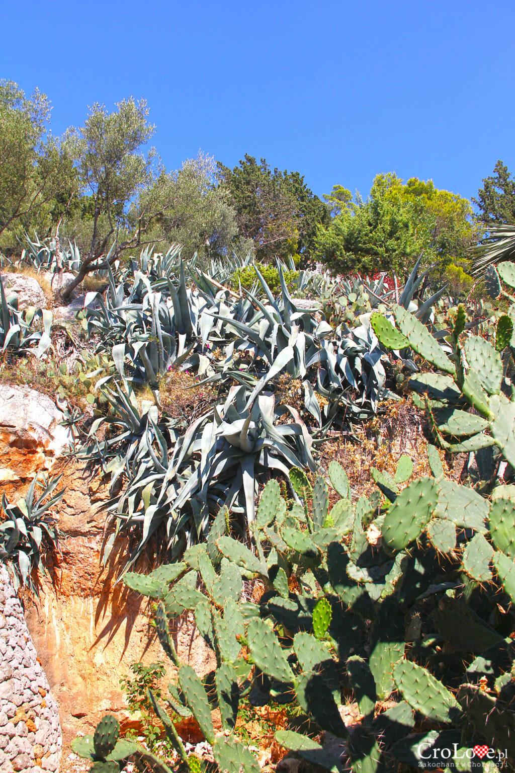 Ogród ziołowy w drodze do Tweirdzy Španjola